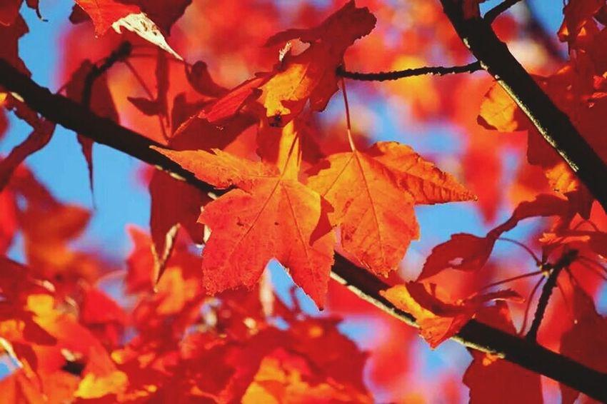 Streamzoofamily Tadaa Community Hello World Nature_collection