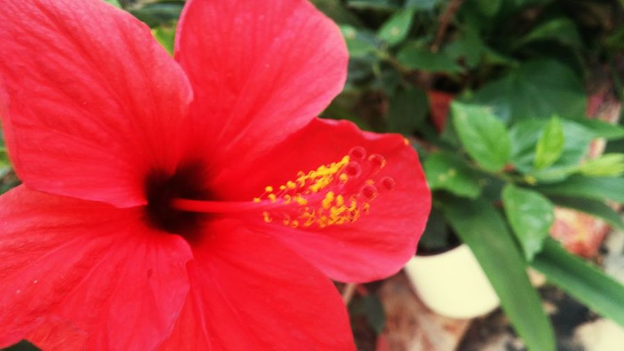 Flower Nature Red