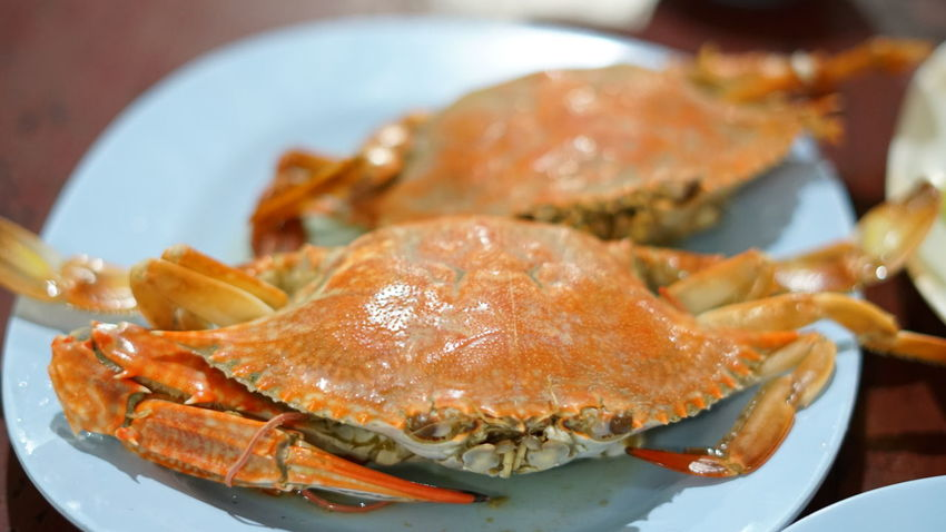 steamed blue crab Blue Crab Crustacean Gourmet Seafood Plate Fish Close-up Food And Drink Crab - Seafood Serving Dish Appetizer Cooked