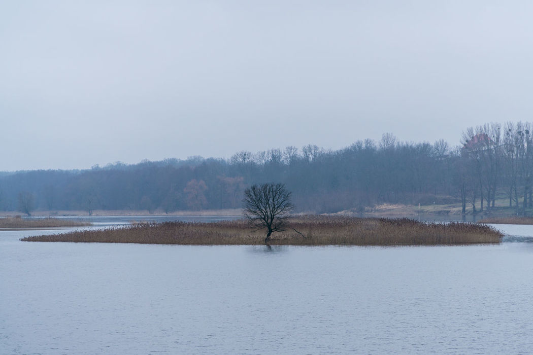 Landsscape photography in the area of Oderbruch in Germany. Ice Tree Bare Tree Bare Trees Beauty In Nature Cold Day Island Landscape Lone Nature No People Outdoors Scenics Sky Tranquil Scene Tranquility Tree Water Waterfront