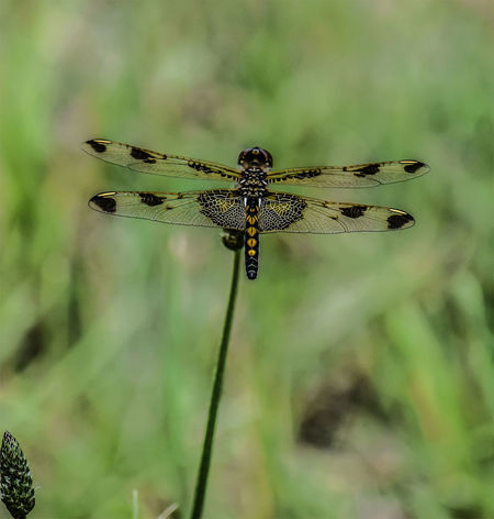 Dragonfly Beauty In Nature Close-up Day Dragonfly Focus On Foreground Fragility Green Color Growth Insect Nature No People One Insect Outdoors Plant