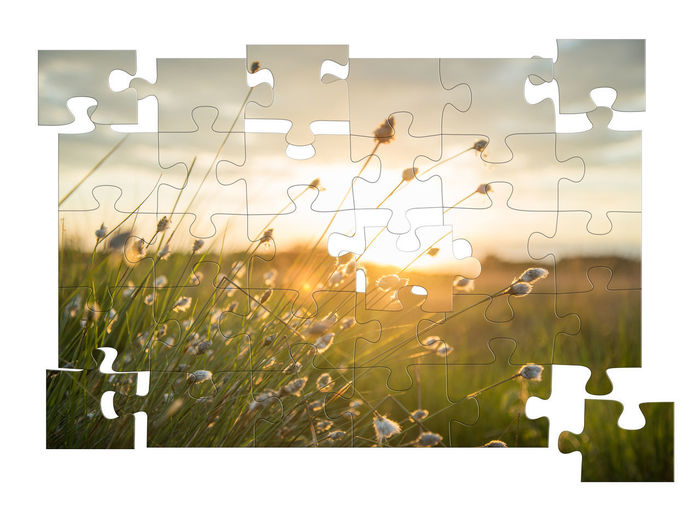 Nature Auto Post Production Filter Plant No People Jigsaw Puzzle Outdoors Transparent Focus On Foreground Green Color Transfer Print Puzzle  Grass Digital Composite Sunlight Day Glass - Material Number Leisure Games Solution Lens Flare Plume