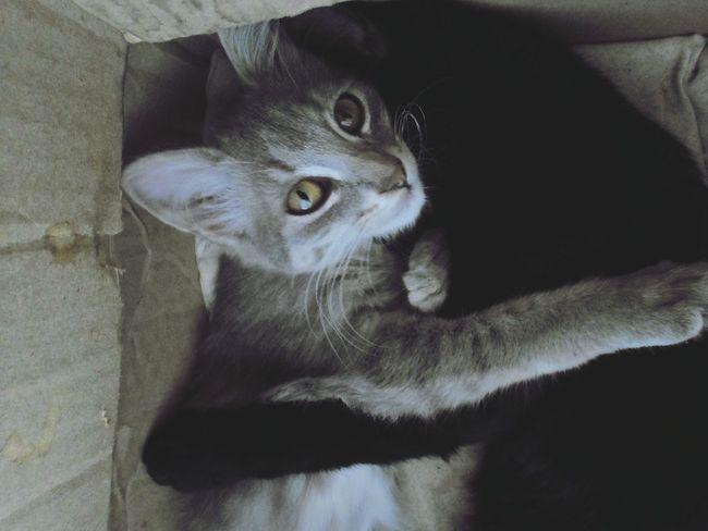Cats Amoreterno Animals Cat ♡♡♡
