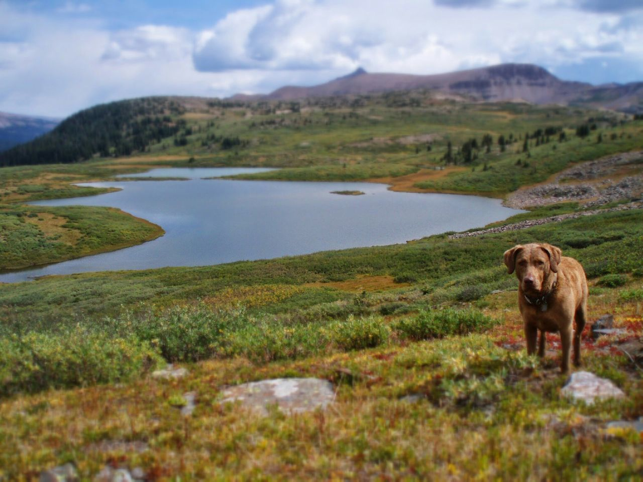 dog, domestic animals, one animal, animal themes, mammal, pets, grass, mountain, nature, landscape, field, no people, day, green color, outdoors, beauty in nature, scenics, sky