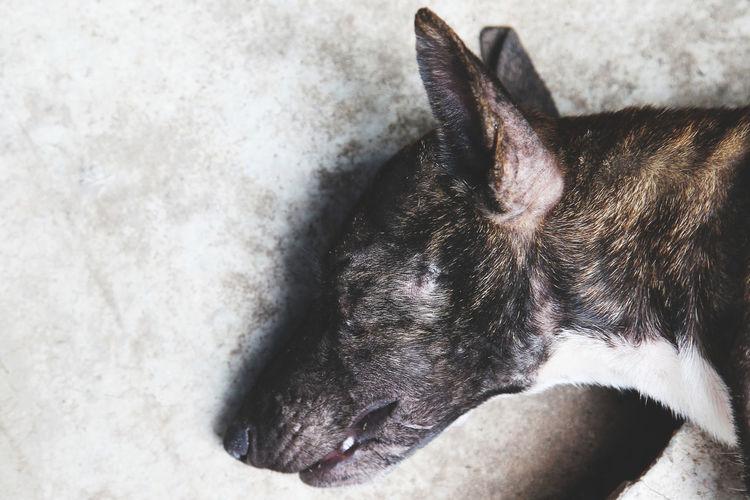 High angle view of dog sleeping on floor