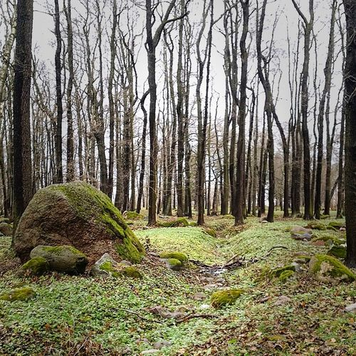 Tree Growth Nature Tranquility Green Color Grass Tree Trunk No People Tranquil Scene Outdoors Forest Beauty In Nature Landscape Sky Scenics Day Estonia Tallinn Freedom