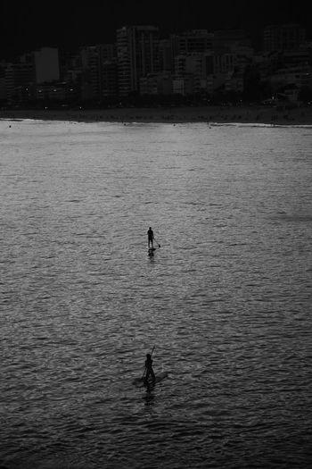 Silhouette of ducks swimming in sea