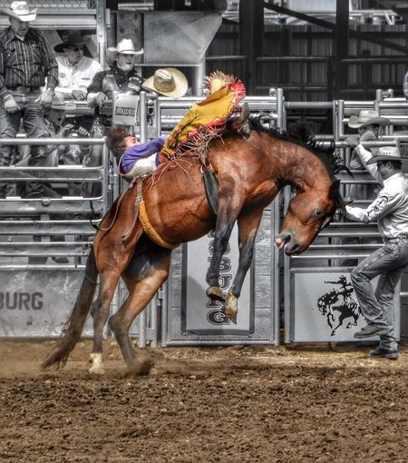 Ellensburg Rodeo Washington Horse Horseback Riding Men Riding Cowboy Hat Cowboys Nikon D3100