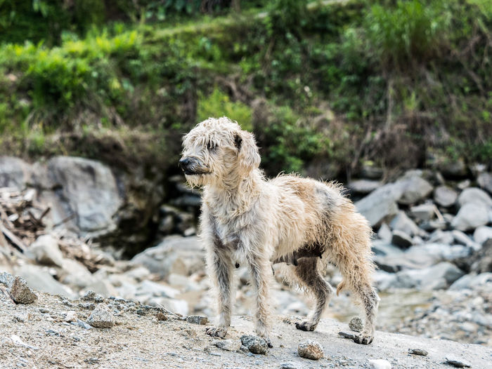 A stray dog in Ecuador Animal Themes Animal One Animal Mammal Domestic Animals Domestic Vertebrate Pets Solid Rock - Object Rock Land Day Focus On Foreground No People Standing Nature Field Animals In The Wild Animal Wildlife Dog Stray Dog Pet Canine