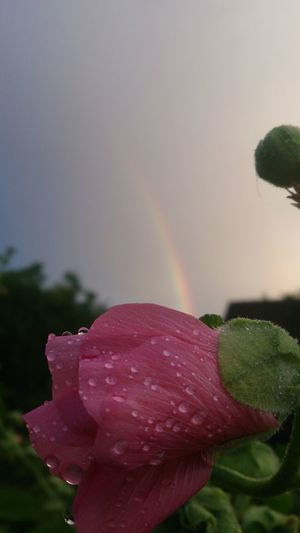 Drop Nature Water No People Beauty In Nature Close-up Fragility Day Freshness Outdoors Flower Renbow EyeEmNewHere
