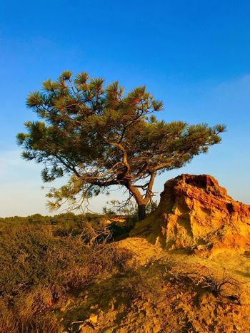 Landscape Nature Beauty In Nature Tranquility Tree Tranquil Scene No People Day Outdoors Scenics Clear Sky Sky IPhone7Plus IPhoneography Torrey Pine Desert