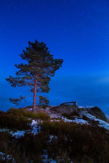 Rusakulan , Örebro, Sverige Astronomy Beauty In Nature Blue Idyllic Landscape Nature Night No People Outdoors Scenics Single Tree Sky Star - Space Tranquil Scene Tranquility Tree