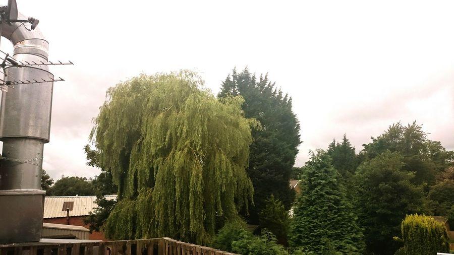 Man-made vs Nature, Manchester Tree No People Nature ManmadeVsNature Urban Nature Beauty In Nature Industrialbeauty Manchester Naturevsmanmade Naturevscity Naturevsbuildings