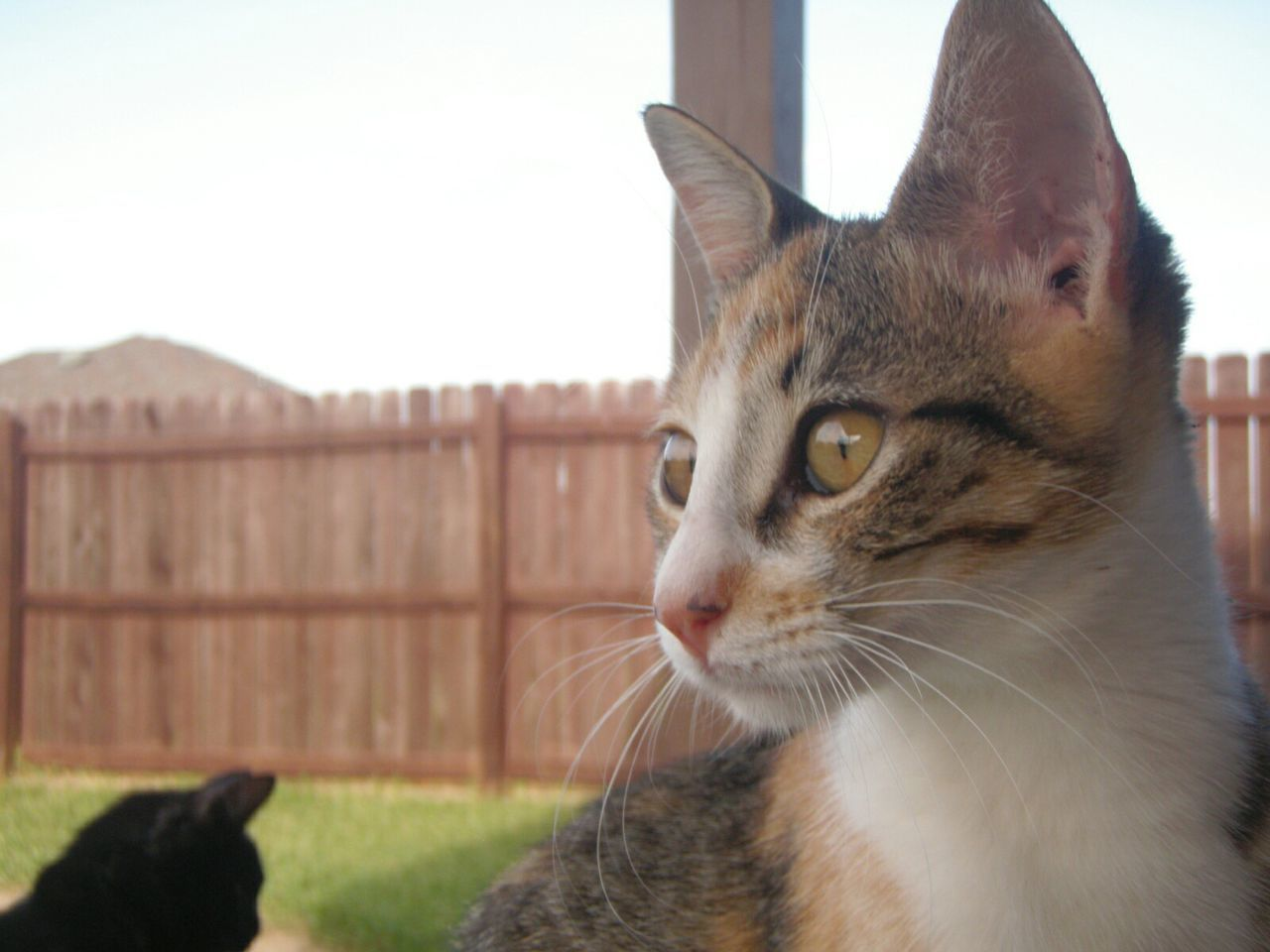 Close-Up Of Cats On Field Against Fence