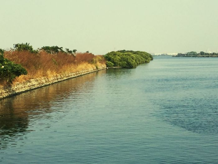 Water Sky Waterfront Tranquility Tree Plant Tranquil Scene