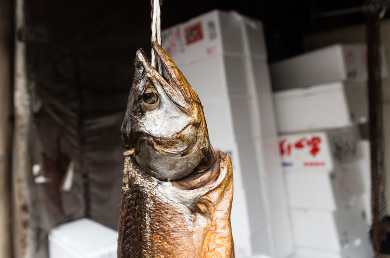 EyeEm Selects No People Hanging Fish Day Close-up Outdoors Market Sapporo-shi Hokkaido Japan