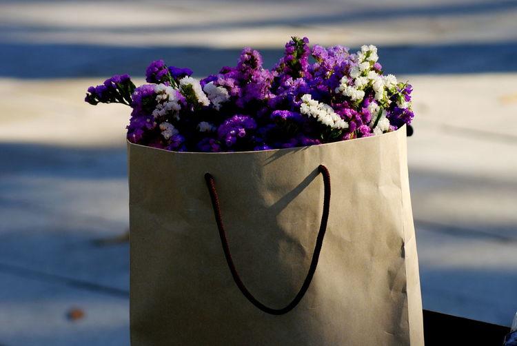 Close-up of purple flower pot on plant