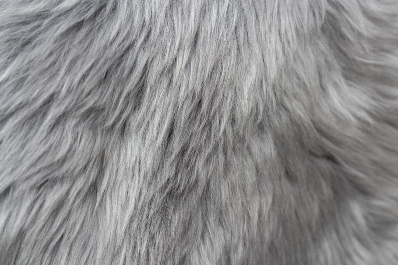 Mammal Hair