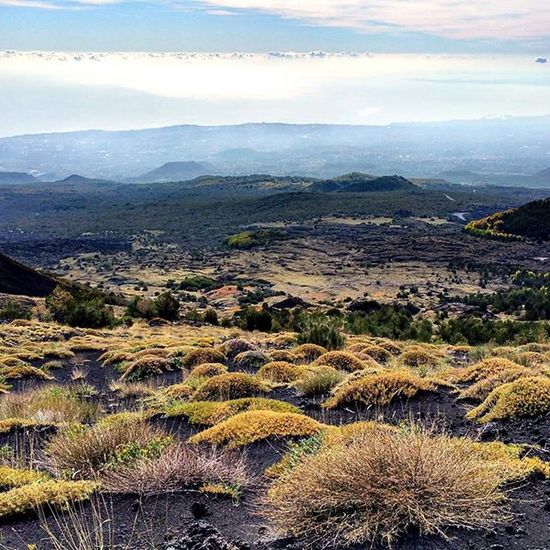 Etna...excursion..eastcost! Italy Sicily Catania Etna Mountain Volcano Excursion Great day Panoramic 180degrees Relax Stopnoises Wild Greatday Nature Naturelovers lovers Downhill Trekking Awesomeplaces Green Trees Eastcoast