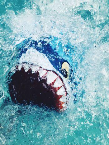 Fun Floaties Shark Teeth Lifestyles Pool Water