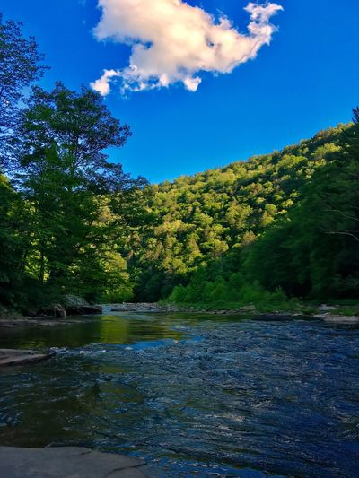 Water Creek Stream Plant Tree Sky Water Growth Nature Beauty In Nature Tranquility Cloud - Sky Day No People Green Color Outdoors Blue