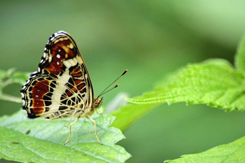 Happy weekend EyeEm Nature Lover EyeEm Best Shots - Nature Nature