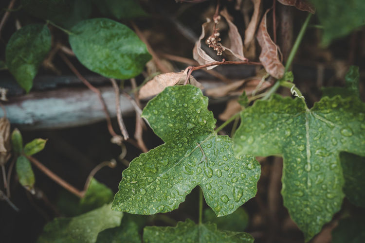 Green leave vintage filter styles Leaf Plant Part Growth Plant Green Color Close-up Nature Beauty In Nature No People Day Focus On Foreground Selective Focus Freshness Outdoors Land Drop Leaf Vein Tranquility Field Leaves Vintage Leafes