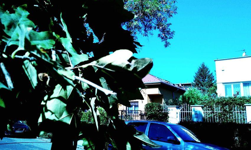 Budapest Budapest, Hungary Nyår Summer Varos Urban Fa Tree Falevelek Leaf Colorsofsummer Nyárszínei
