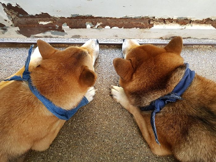 Close-up of two dogs