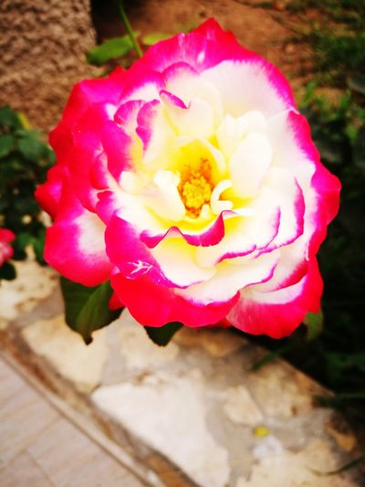 Il Manque , Le Parfum. Flower Pink Color Petal No People Fragility Nature Beauty In Nature Flower Head Day