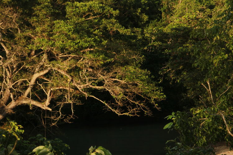 758 Lost In The Landscape Nature St.lucia Beauty In Nature Caribbean Forest Nature Outdoors Plant Sea And Sky Sunset Tree Water