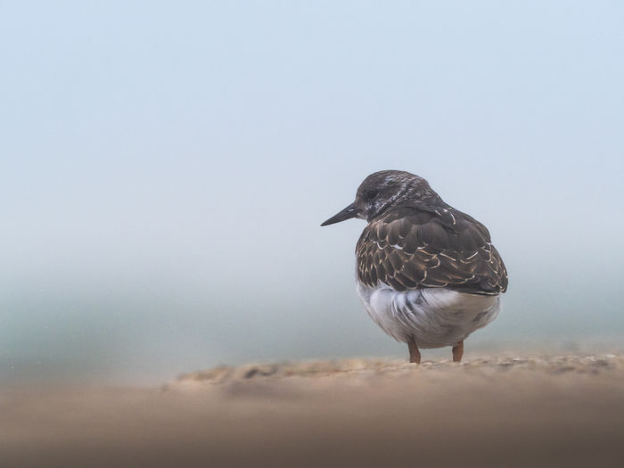 Close-up of seagull perching on the beach