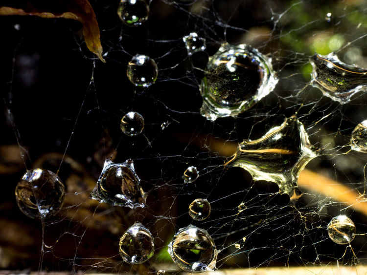 After the Rain Beauty In Nature Close-up Dark Backgrund Day Drop Focus On Foreground Fragility Freshness High Angle View Macro Macro Photography Nature No People Outdoors Raindrops On Spider Web Spider Web Water Water Drop Web Wet