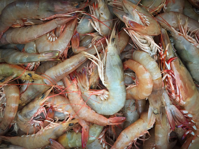 Close-up of prawns for sale at market
