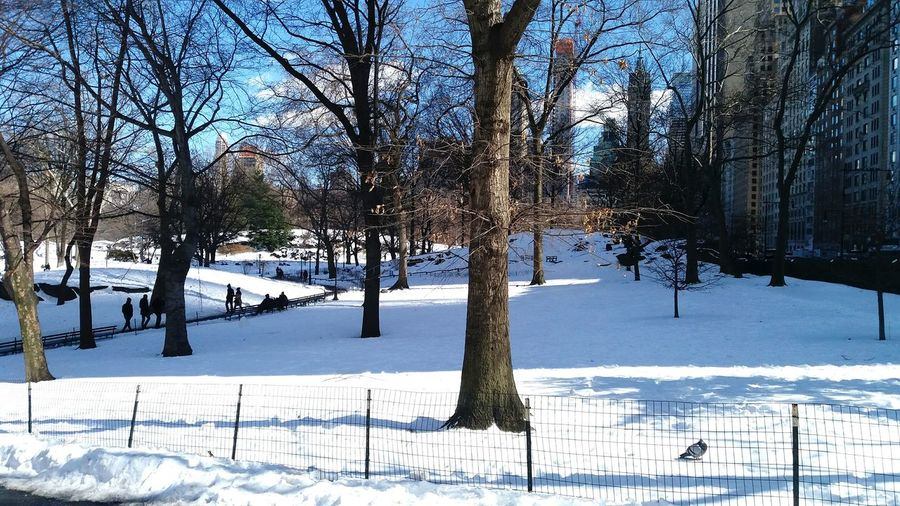 Winter In New York Big Apple New York Snow In NYC Central Park, New York Central America Architecture Beauty In Nature Lake Bare Tree Day Tranquility Growth Outdoors No People Nature Water Reflection Sky Tree
