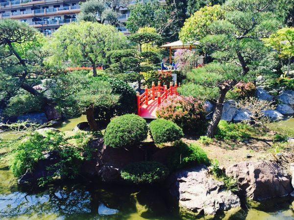 Japanese Garden Peaceful Bonzai Trees Nature Zen Monaco Taking Photos