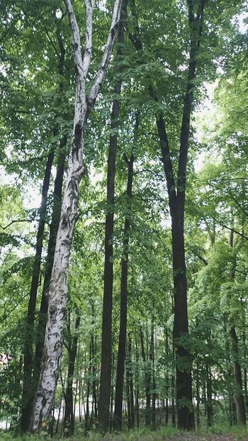 Bedzin Będzin Trees Relaxing
