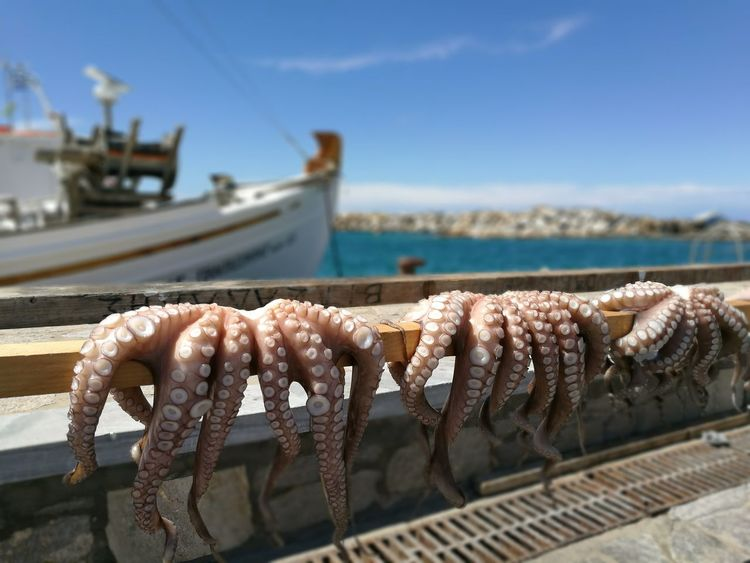 Nofilter Octopuss Boat Holidays Greece Paros_island GREECE ♥♥ Pornfood