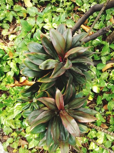 backgroun Backgroun Flower Leaf Flower Head High Angle View Close-up Plant Green Color Needle In Bloom Blooming Stamen Cannabis Plant