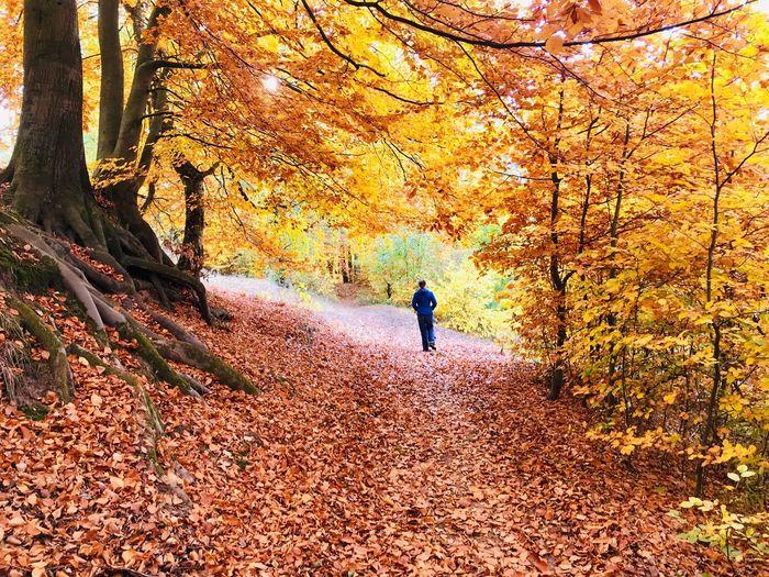 Man walking on street amidst trees during autumn