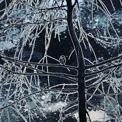 Bird Bird Birdphotography BirdLovers Natureshots Naturephotography красотавокругнас красотарядом красотаприроды краскиприроды природапрекрасна природалучшийхудожник зима Природа зимнийдень снег зимняясказка природарисует мороз зимушказима красотазимы лед Nature Composition Cold Temperature Winter Tree Backgrounds Close-up Sky Icicle Ice Frozen Frost Weather Condition Cold