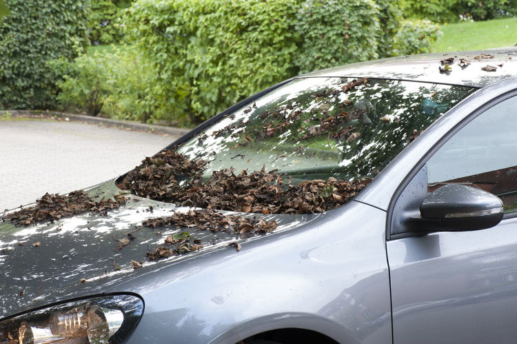 Leaves and foliage on the car window Asphalt Autumn Avenue Care Country Road Security Traffic Autumn Foliage Car Danger Dangerously Flatly Foliage Passenger Car Season  Sheet Wet Windscreen Wiper