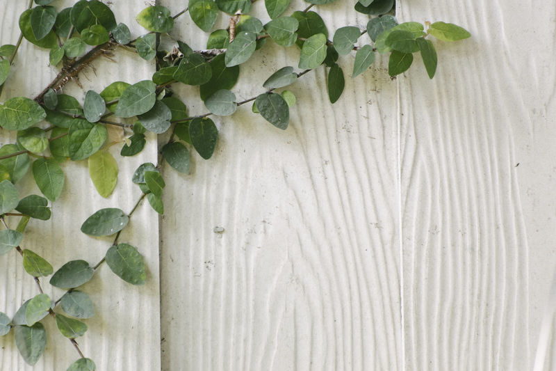 Close-up of plant against white wall