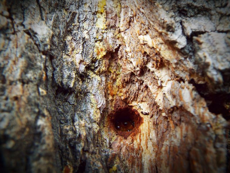 Textured  Close-up Rough Day Weathered Outdoors Nature Tree EyeEmNewHere Las Vegas, Nevada Mountain Range Wilderness Area Desert Landscape Mountain Desert Landscape Tree Sap Looks Like A Spider Spider Eyes Arachnophobia