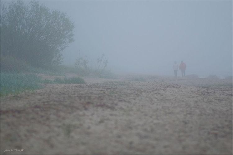 Foggy Fog Landscape Story Time