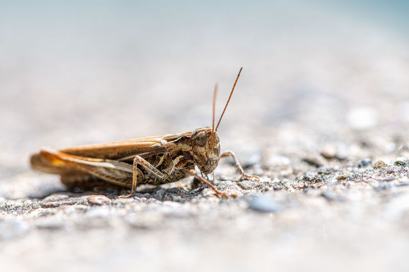 Close-up of insect on land