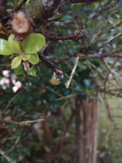 Nature No People Day Leaf Tree Water Rain RainDrop Warterdrop After The Rain