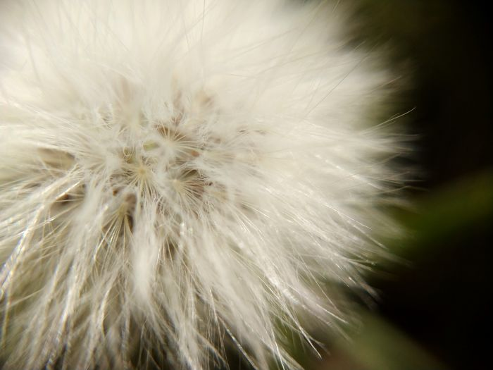 evolution of nature Fiber Natural Fiber Clothing Plant Life Plant Reproduction Plant Growth Dandelion Flower Head Flower Backgrounds Full Frame Multi Colored Defocused Close-up Dandelion Seed Dandelion Single Flower Wildflower Abstract Backgrounds Botany Abstract Marbled Effect Color Gradient Uncultivated Plant Life Stem Seed In Bloom Blossom Softness