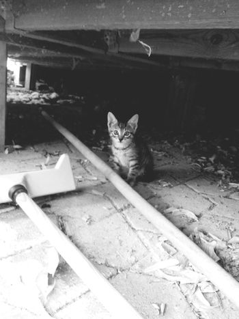 Black&white Cat♡ Cute Kitten Wild Kitten