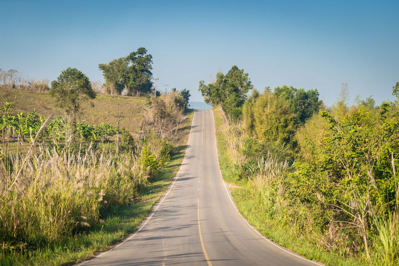 Plant Tree Road The Way Forward Transportation Direction Nature No People Day Green Color Landscape Growth Sky Beauty In Nature Tranquil Scene Tranquility Land Clear Sky Environment Scenics - Nature Outdoors Diminishing Perspective